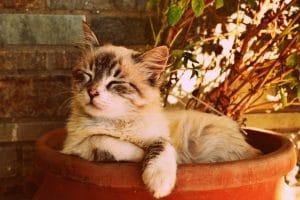 kitten-asleep-in-a-pot-1995961_1920